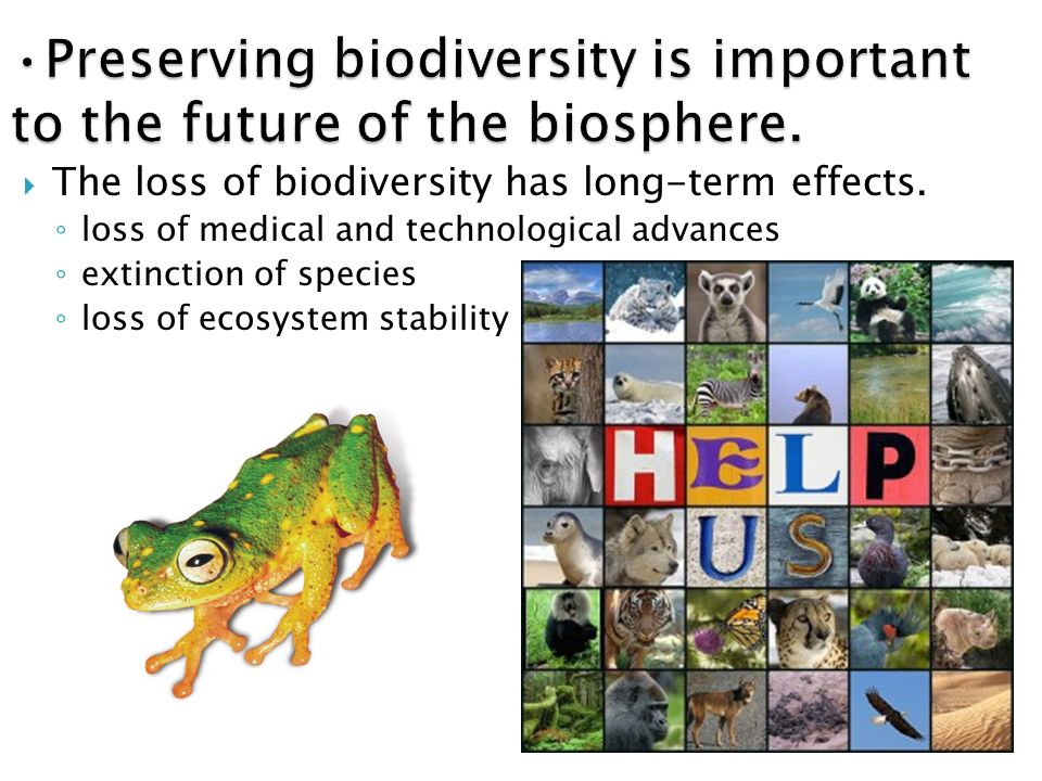 human impact on biodiversity and ecosystem Marine ecosystems: human impacts on biodiversity, functioning and services (ecology, biodiversity and conservation) - kindle edition by tasman p crowe, christopher l j frid download it once and read it on your kindle device, pc, phones or tablets use features like bookmarks, note taking and.