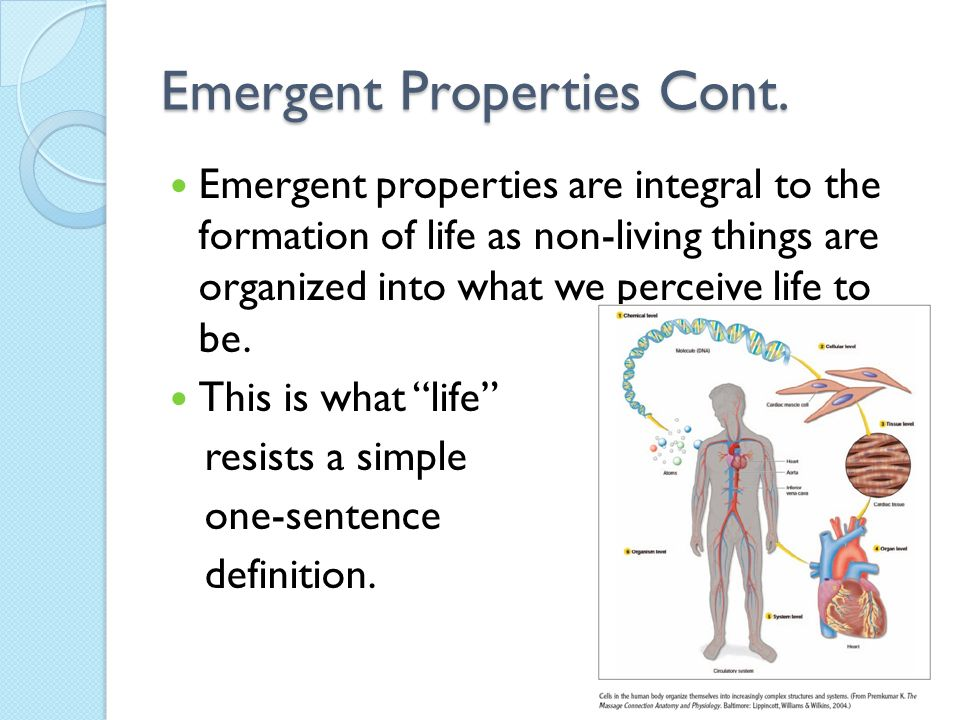 12 Emergent Properties Cont.