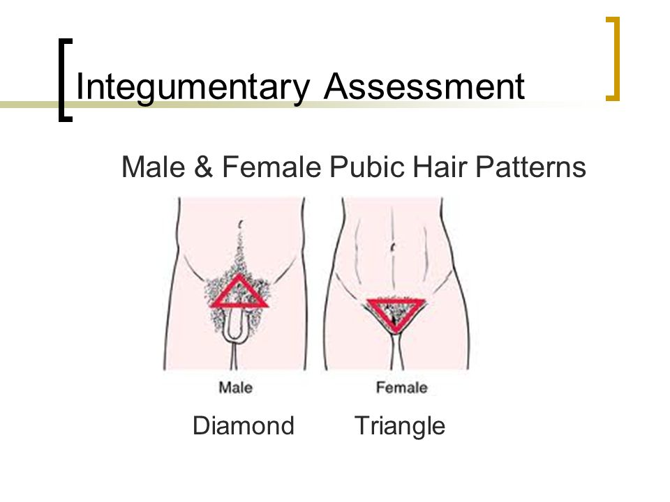 male pubic hair pattern