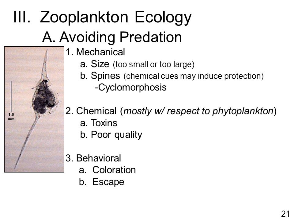 zooplankton and phytoplankton relationship with god
