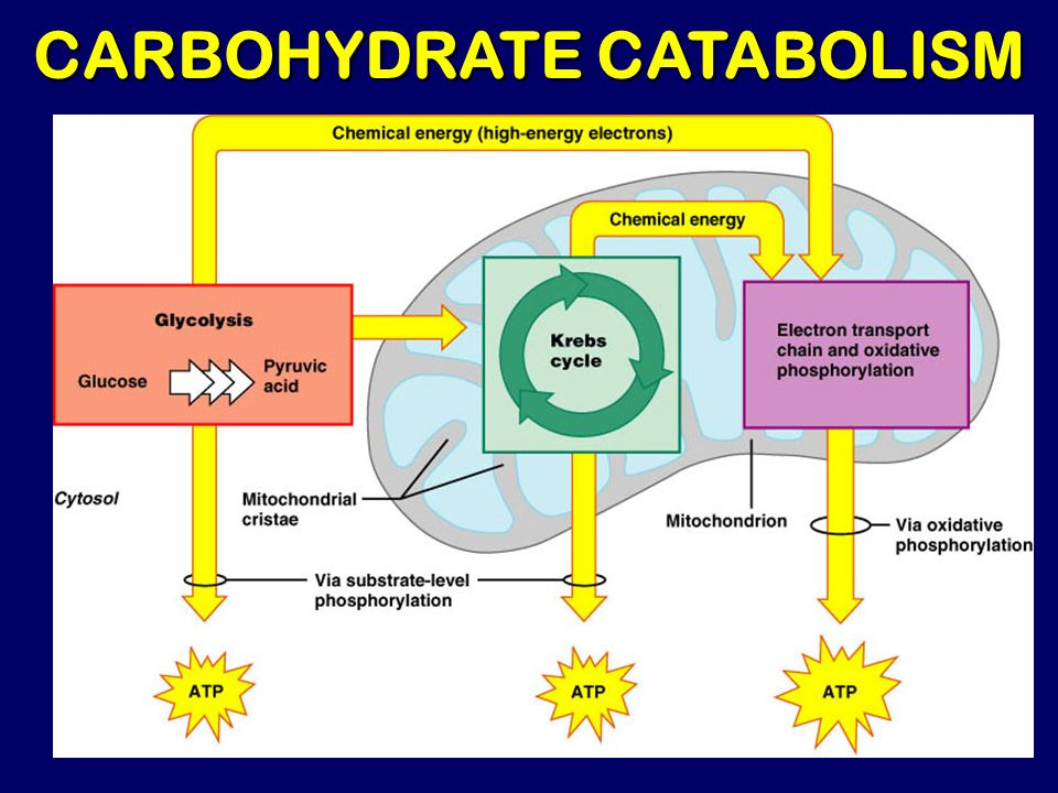 glycolysis ppt video online download