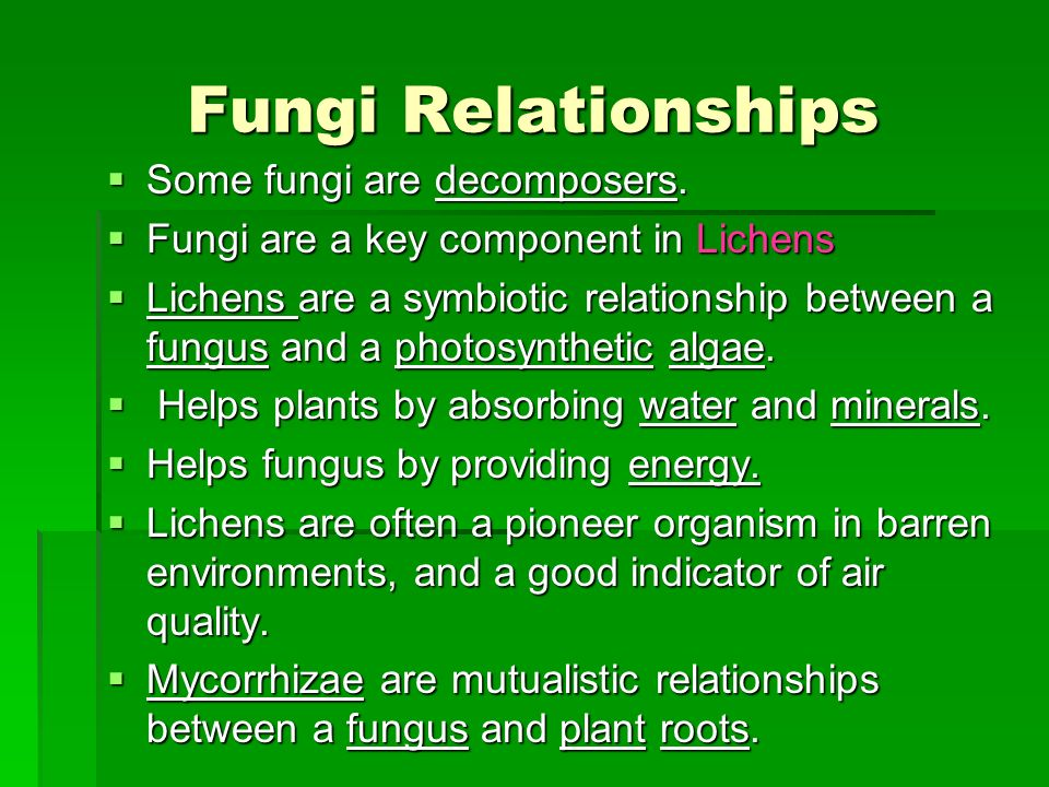 describe the symbiotic relationship between fungi and green algae