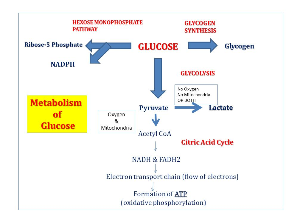 introduction to glucose metabolism ppt video online download
