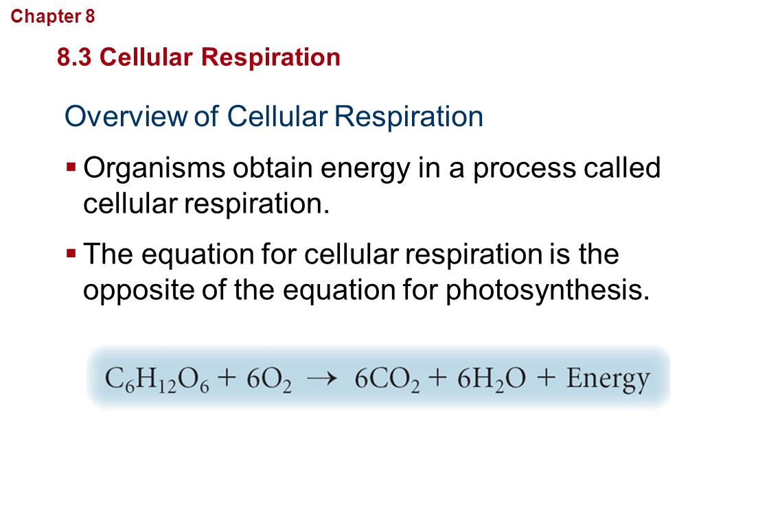 Worksheets Photosynthesis And Cellular Respiration Worksheet Answers ch 8 cellular energy section 1 how organisms obtain overview of respiration