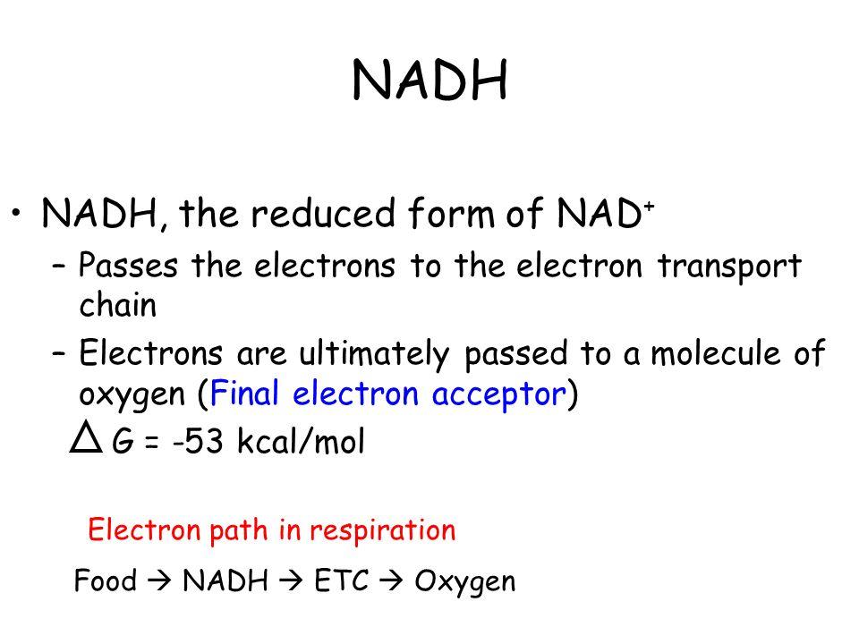 Cellular Respiration A.P. Biology. - ppt download