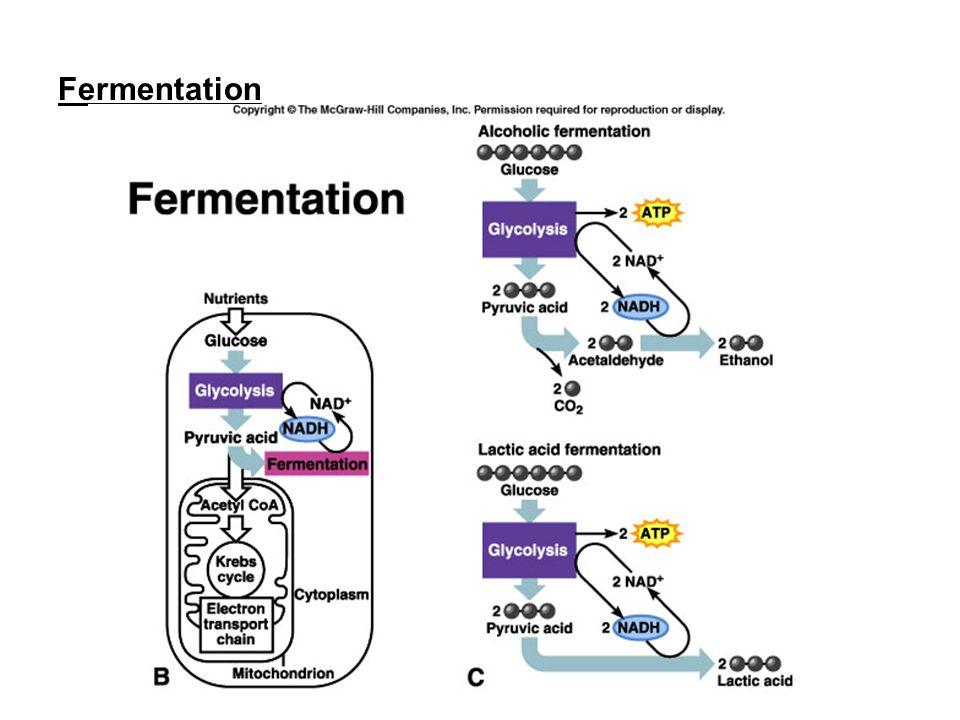 download mitochondria in liver disease