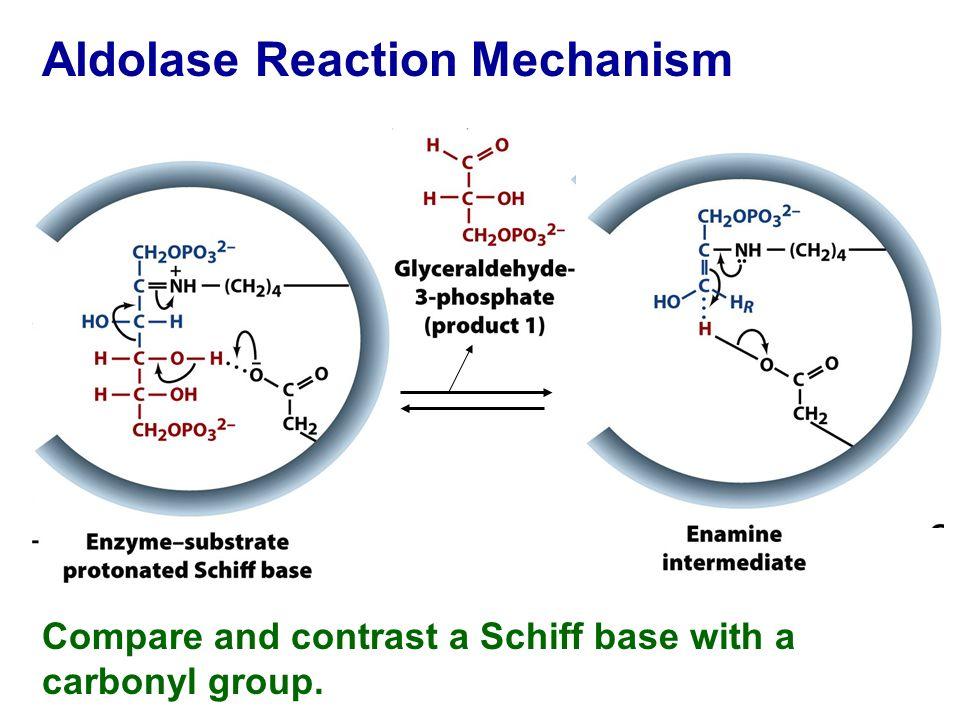 Phosphate Functional Group Glycolysis: Energy Gen...