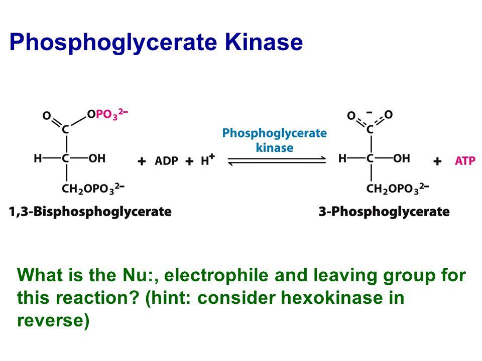 Phosphoglycerate Kinase Glucose Equilibrium