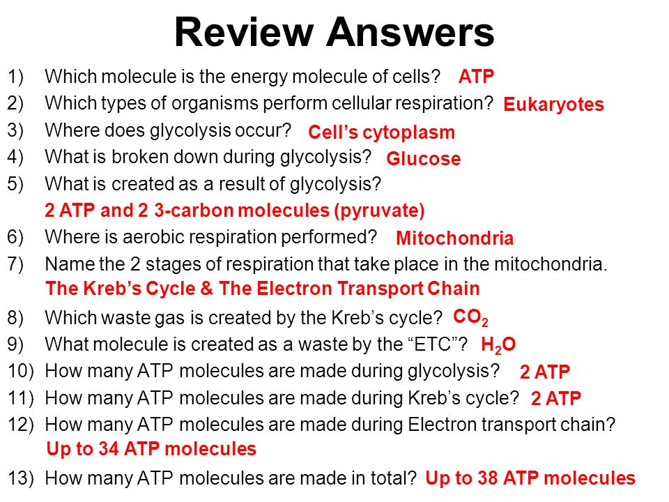 Mastering Bio 181 Ch 9 Cellular Respiration Flashcards Quizlet Where Does The Glycolysis Take Place