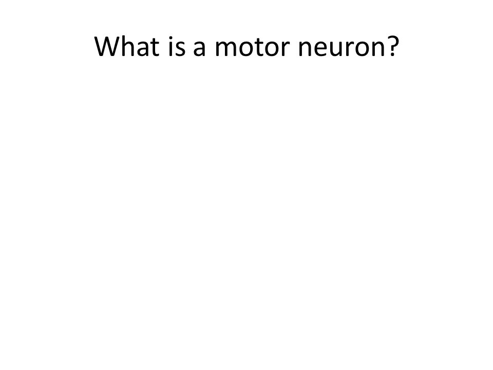 Flash cards chapter ppt video online download for What is a motor neuron