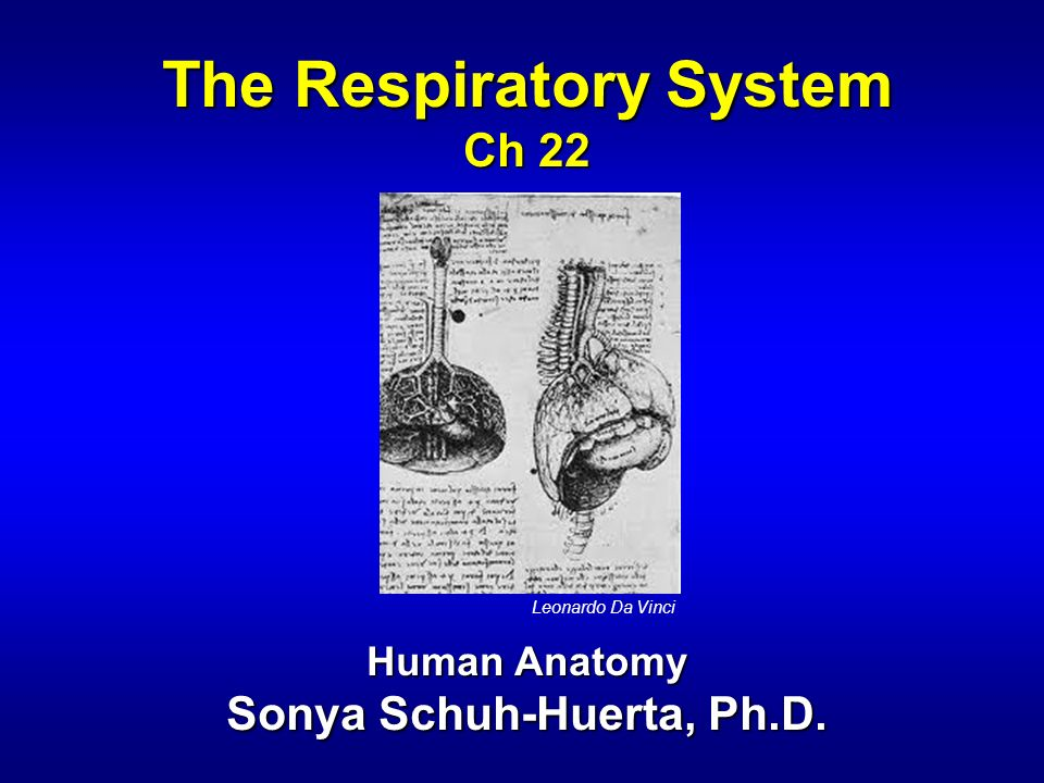 The Respiratory System Sonya Schuh-Huerta, Ph.D.