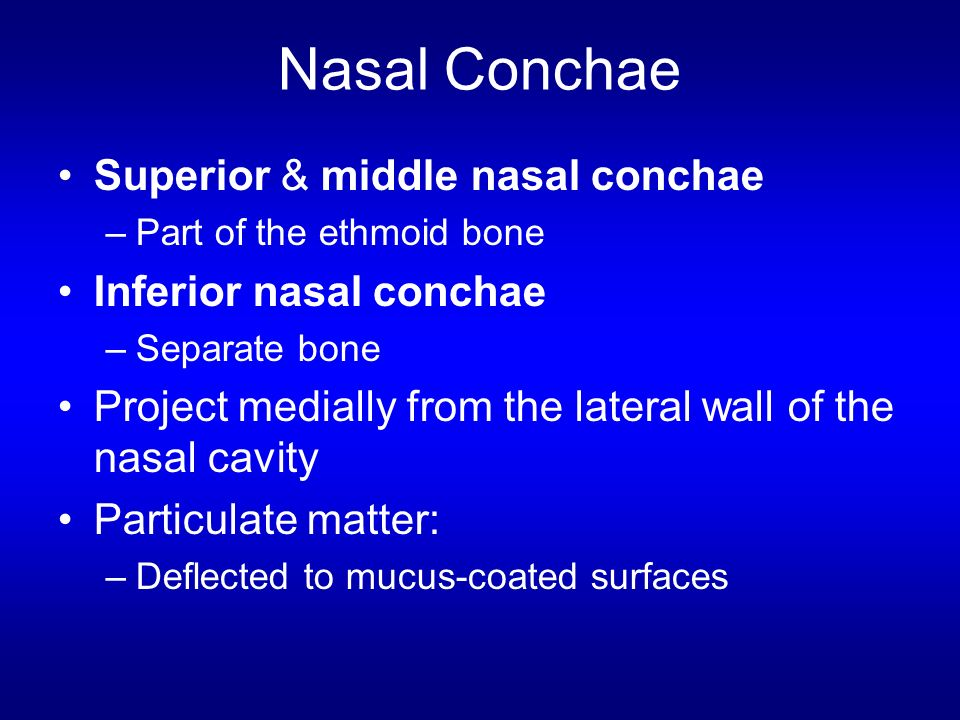 Nasal Conchae Superior & middle nasal conchae Inferior nasal conchae