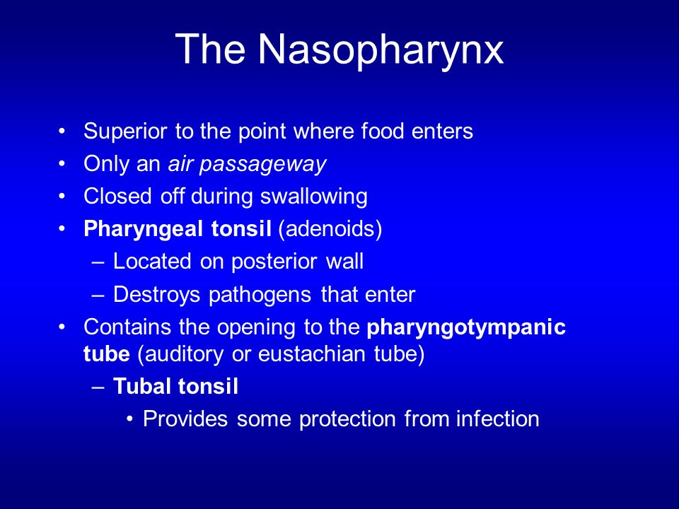 The Nasopharynx Superior to the point where food enters