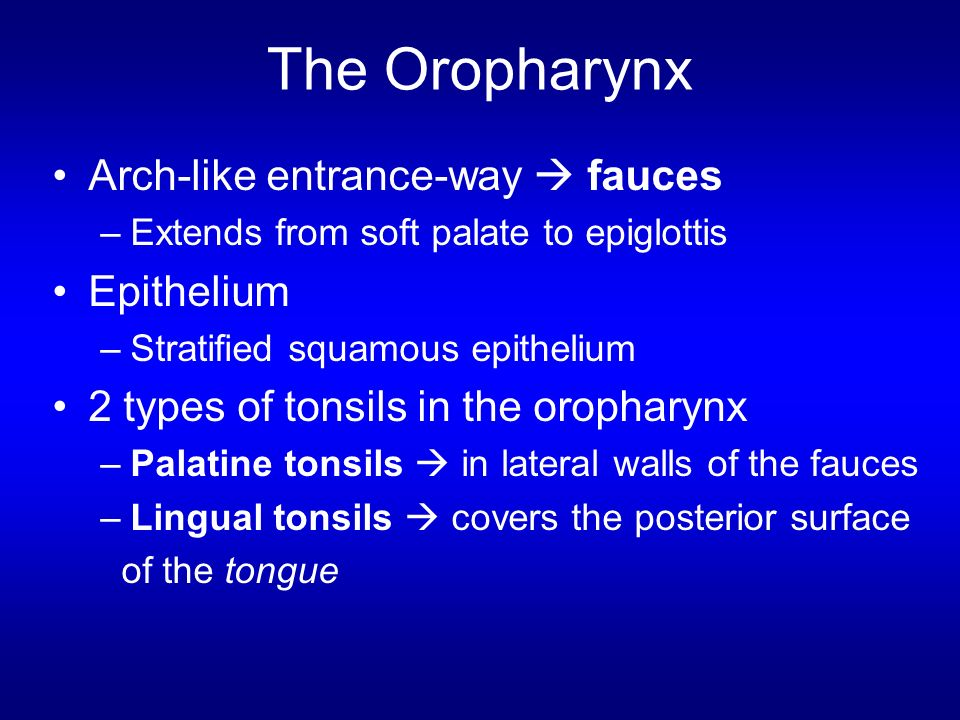 The Oropharynx Arch-like entrance-way  fauces Epithelium