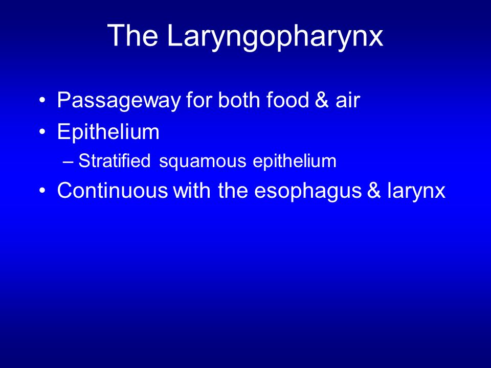 The Laryngopharynx Passageway for both food & air Epithelium