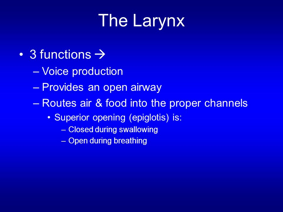 The Larynx 3 functions  Voice production Provides an open airway