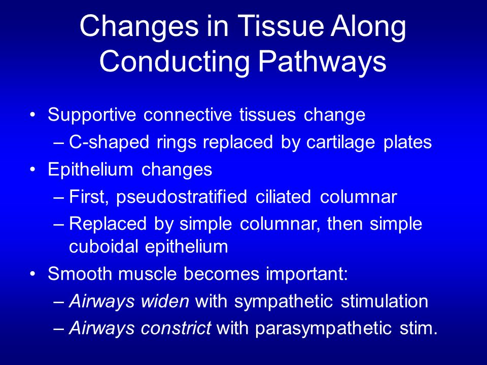 Changes in Tissue Along Conducting Pathways
