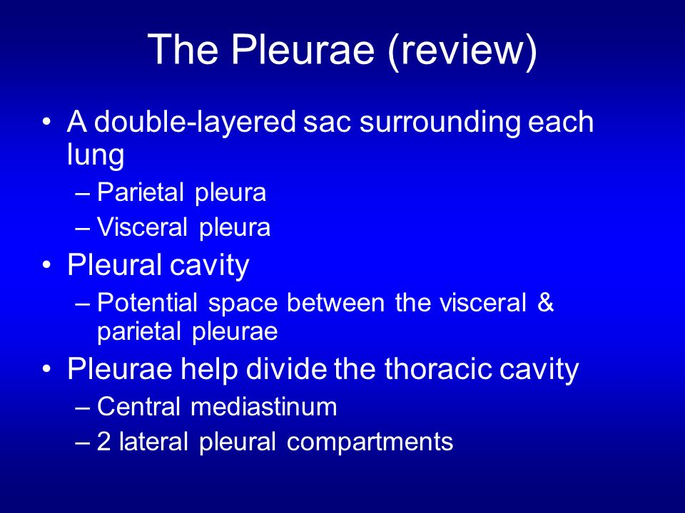 The Pleurae (review) A double-layered sac surrounding each lung