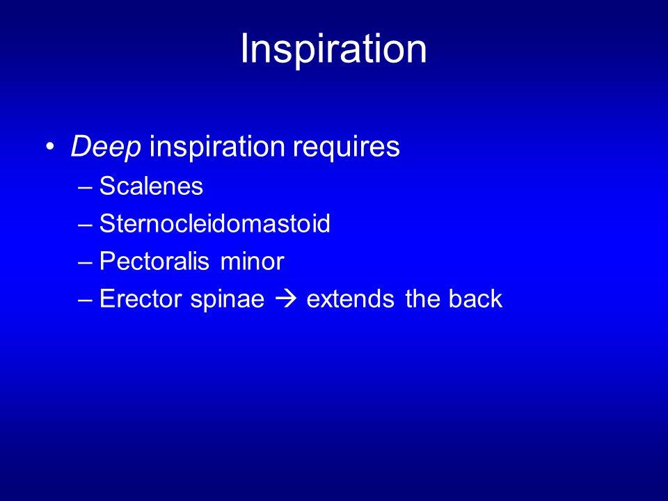 Inspiration Deep inspiration requires Scalenes Sternocleidomastoid