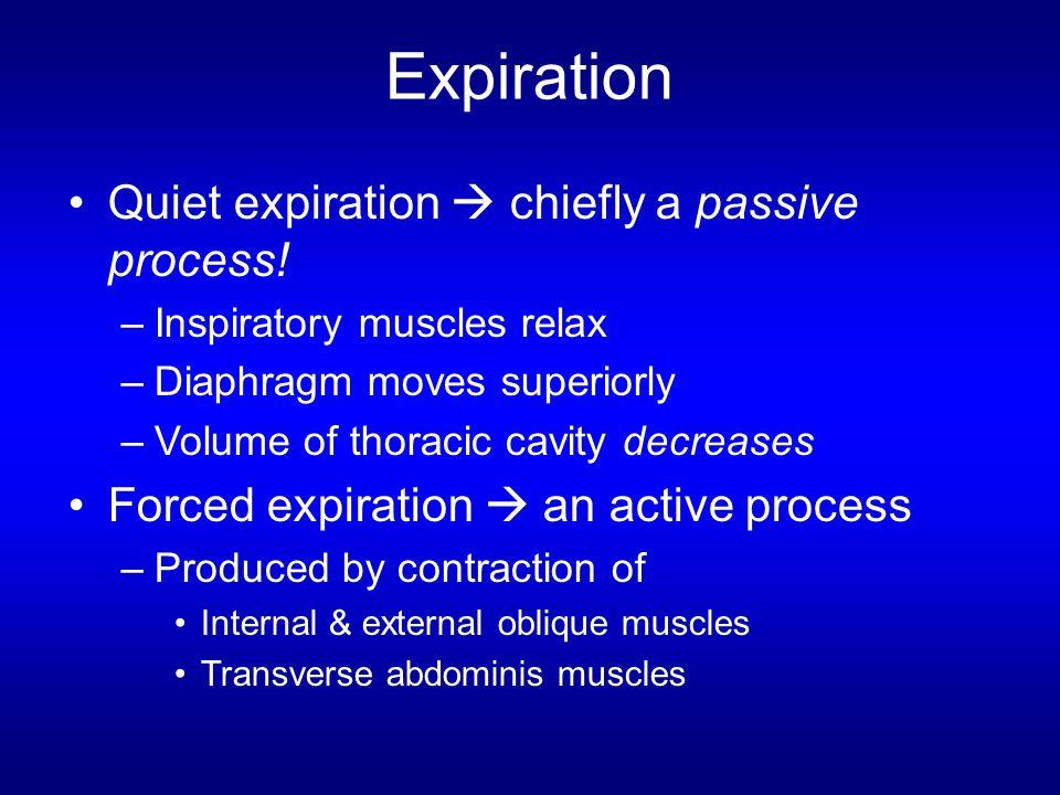 Expiration Quiet expiration  chiefly a passive process!