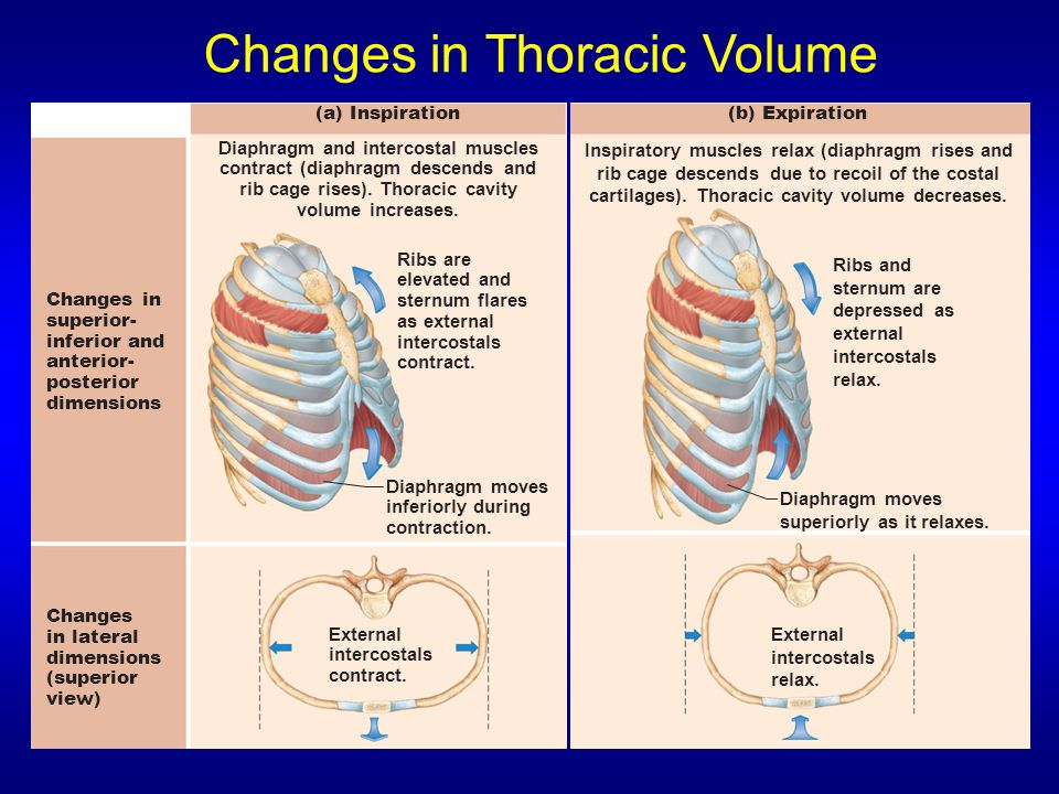 Changes in Thoracic Volume
