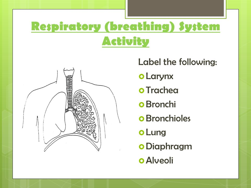 which organs are involved in the respiratory system breathing ppt download. Black Bedroom Furniture Sets. Home Design Ideas