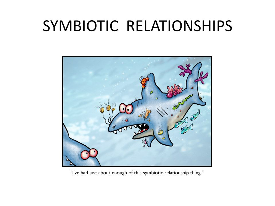 symbiotic relationship and