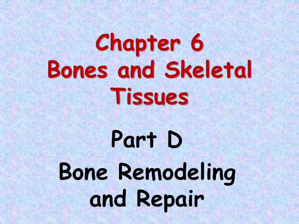 chapter 6 bones and skeletal tissues part c bone development and growth ppt download. Black Bedroom Furniture Sets. Home Design Ideas