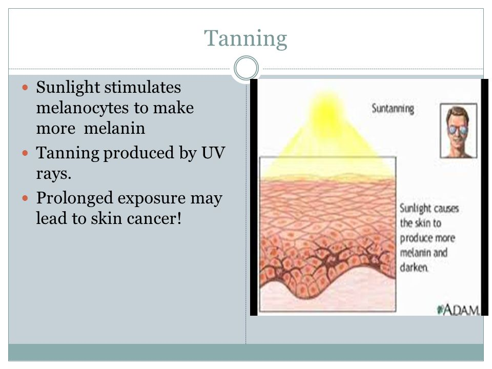Tanning Sunlight stimulates melanocytes to make more melanin