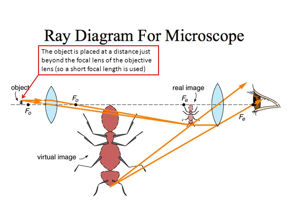 Lesson 6 microscope and telescope ppt download 5 the object is placed at a distance just beyond the focal lens of the objective lens so a short focal length is used ccuart Image collections