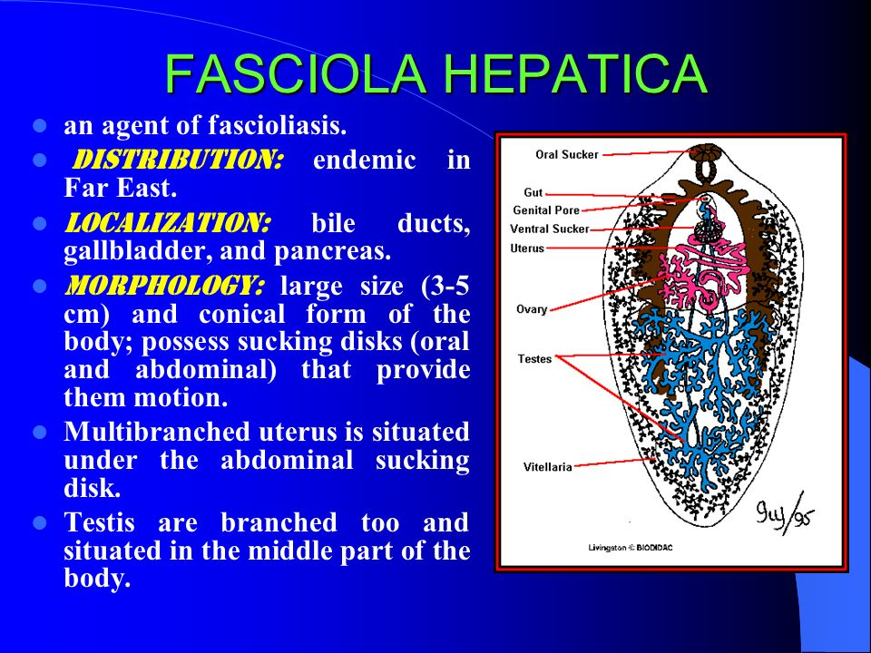 What Color Is Transmission Fluid >> Medical Helminthology. Flatworms - human parasites - ppt video online download