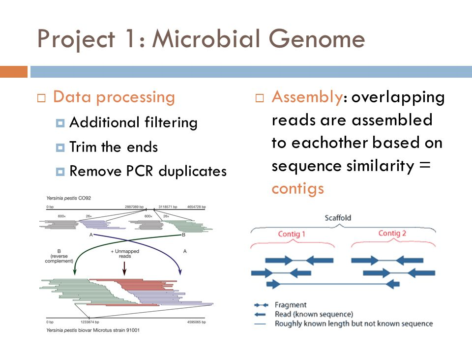 an introduction to microbial genome sequencing Comparing microarrays and next-generation sequencing technologies for microbial ecology research.