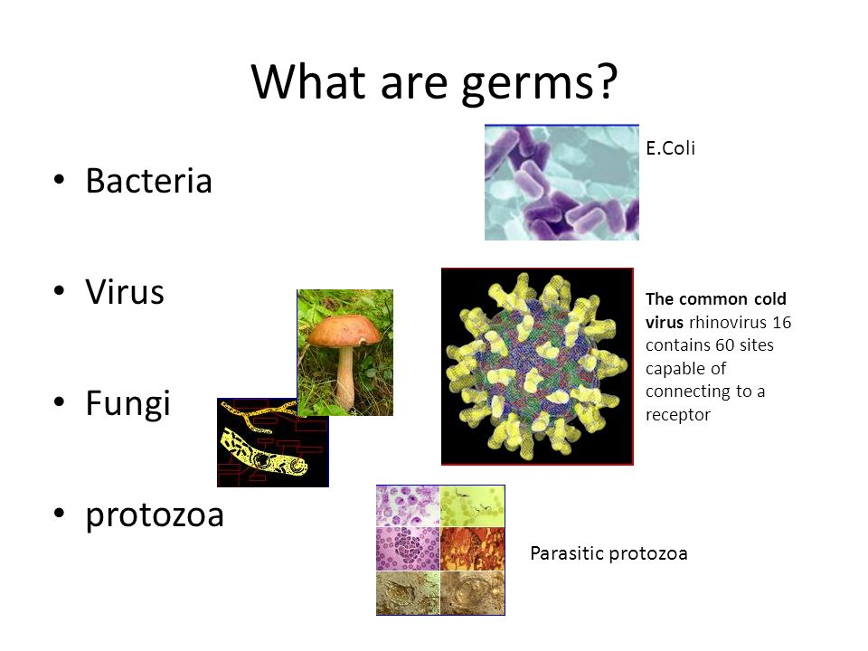 viruses fungi protozoa bacteria info essay C gram-positive bacteria d fungi e protozoans when comparing the types of viruses that infect bacteria essay questions answer all parts of the following.