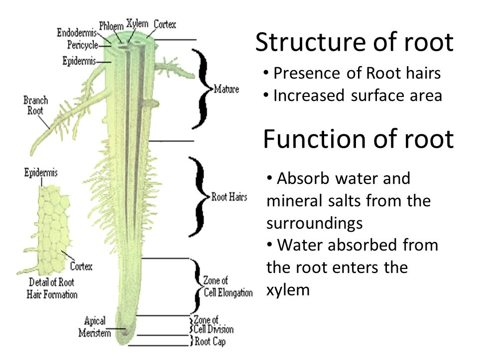 mineral and water function Best food sources of minerals the role of minerals in the body // divinehealthfromtheinsideoutcom by far the best and most ionic form of a full spectrum of minerals is bone broth a full spectrum good quality sea salt is also a fabulous way to get in minerals and trace minerals also good mineral rich water.