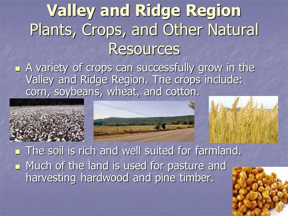 Ridge And Valley Natural Resources