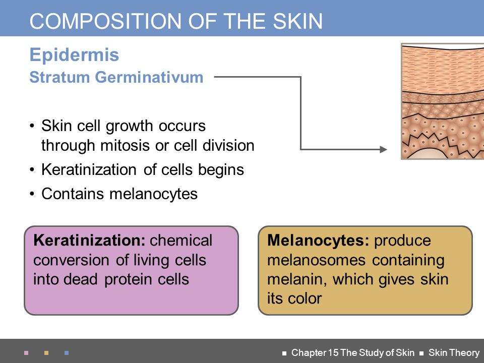a look at the composition and growth of the skin cells Rigidity depends upon arrangement of cells, their adhesions and the orientation of the keratin fibres it is independent of chemical composition or calcium content nail growth and development.