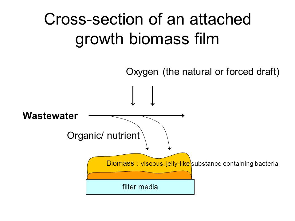 Cross-section of an attached growth biomass film