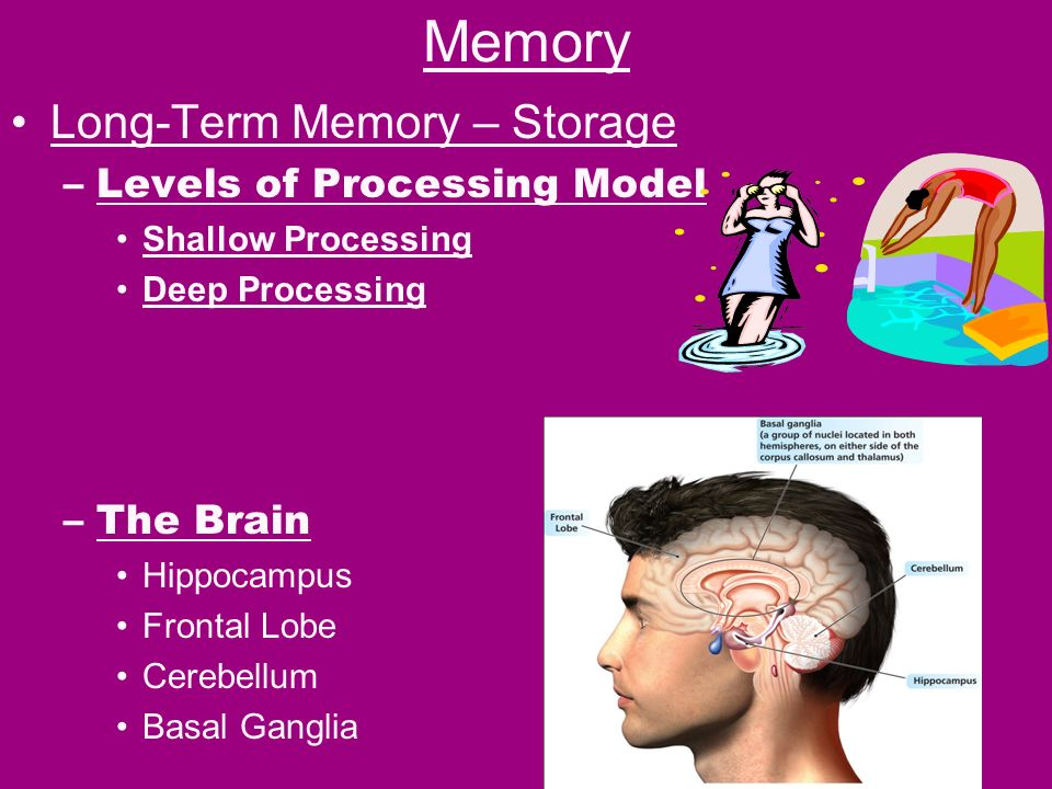 a description of memory as the process of storing and retrieving information in the brain Your emotional state at the time of encoding or retrieving brain regions involved in the emotion-memory interaction the brain region a global process.