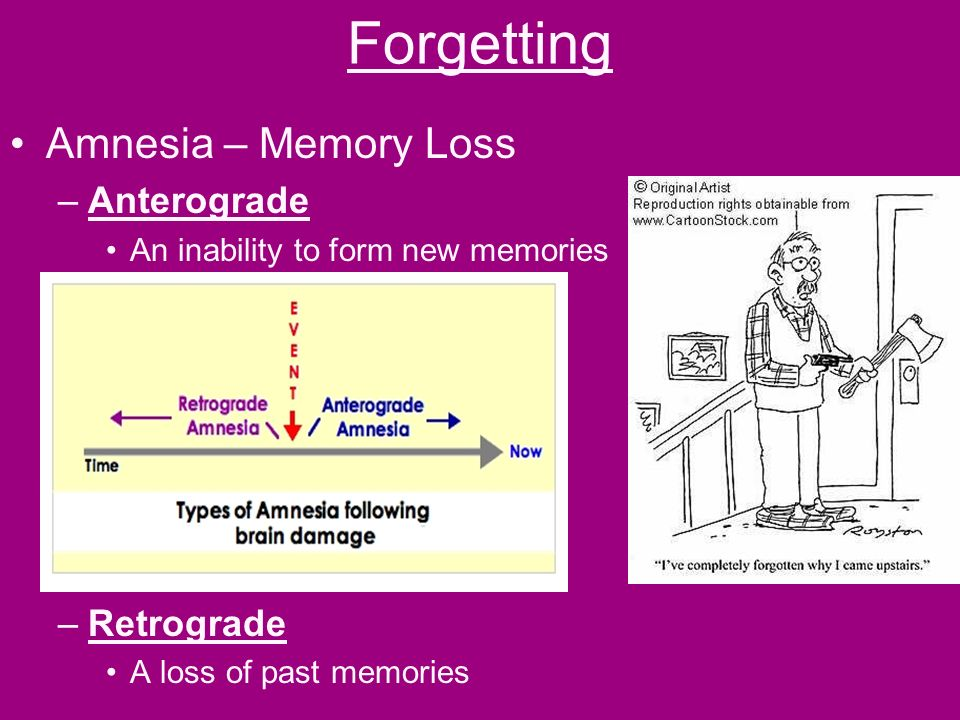 Memory The brain's system for filing away new information and ...