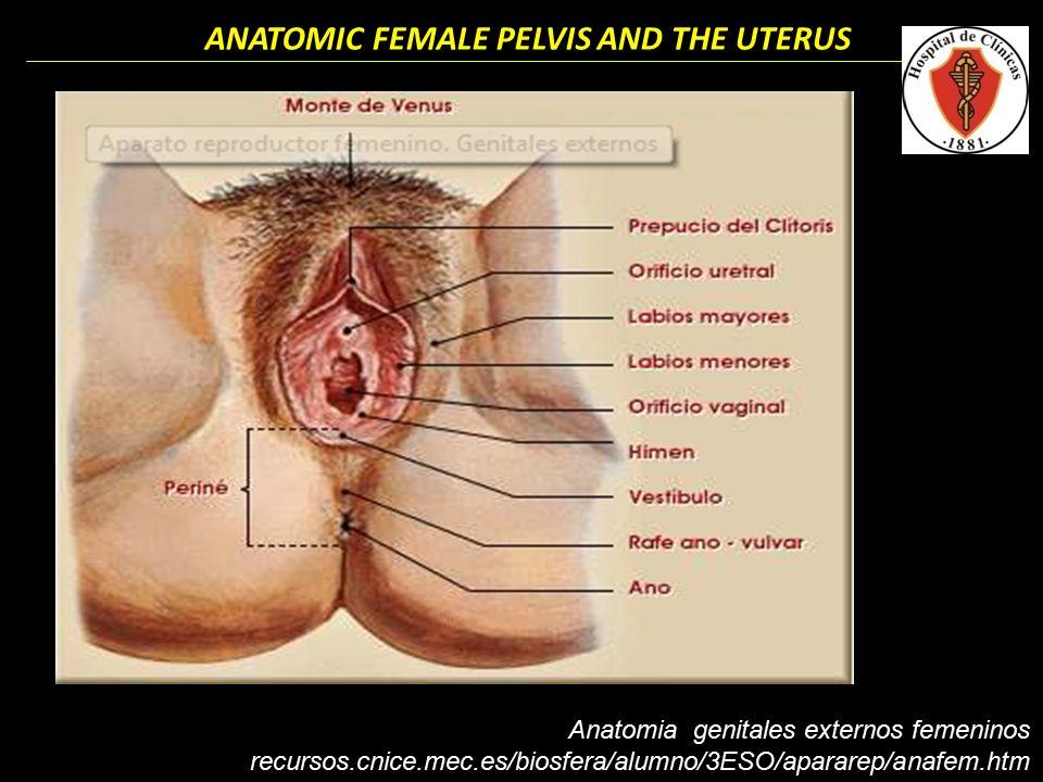 Dorable Vídeo De La Anatomía Vaginal Imágenes - Anatomía de Las ...