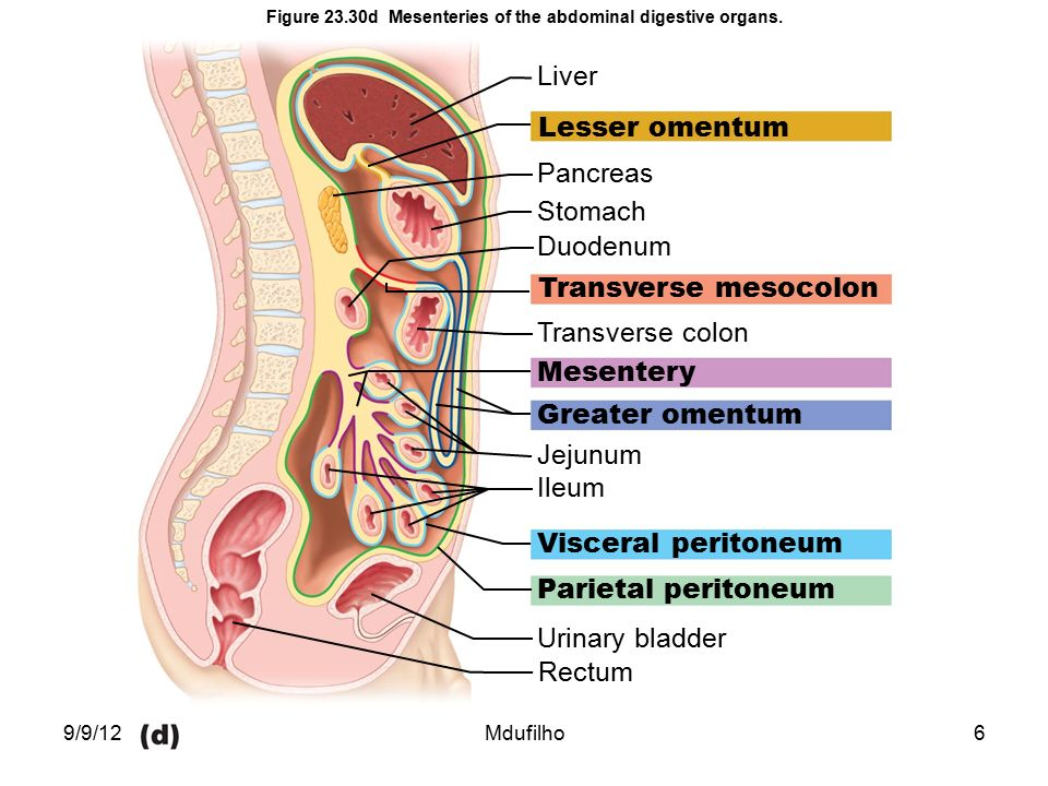 diagram of anatomy of lungs information in chapters 4, 22 and ppt video online download