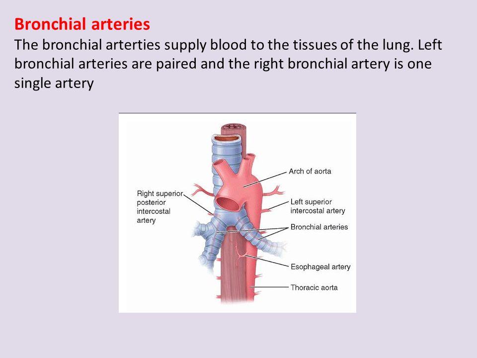 nose amp associated structures larynx trachea pleura lungs
