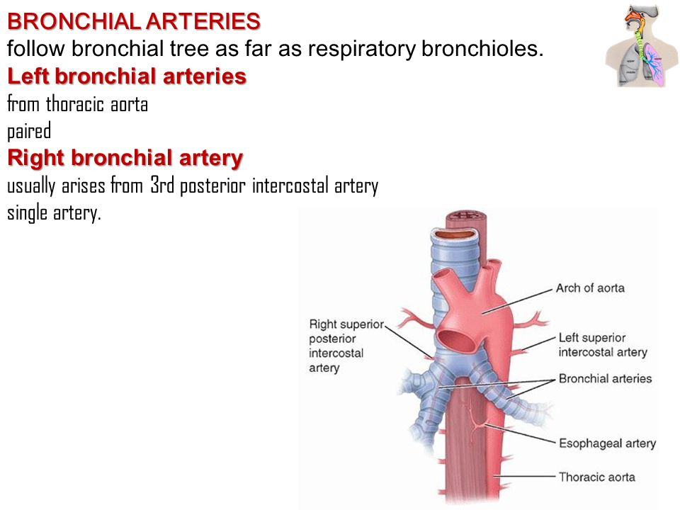 bronchial artery 73612 loadtve