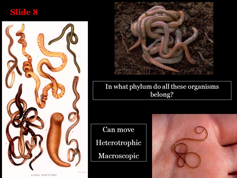 In what phylum do all these organisms belong