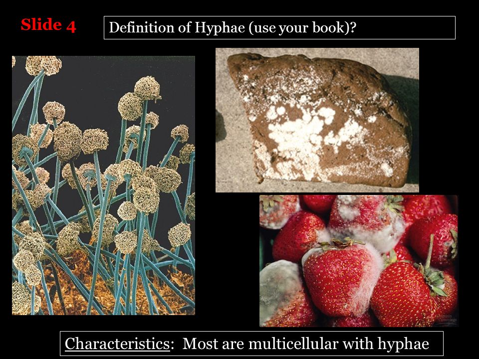 Characteristics: Most are multicellular with hyphae