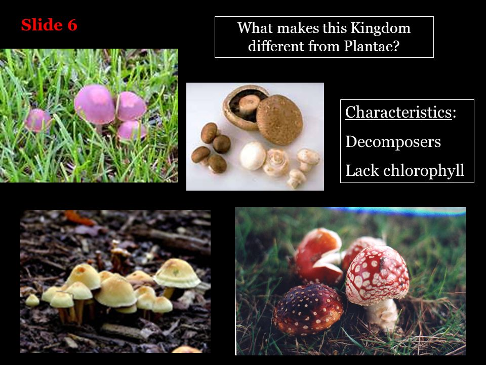 What makes this Kingdom different from Plantae