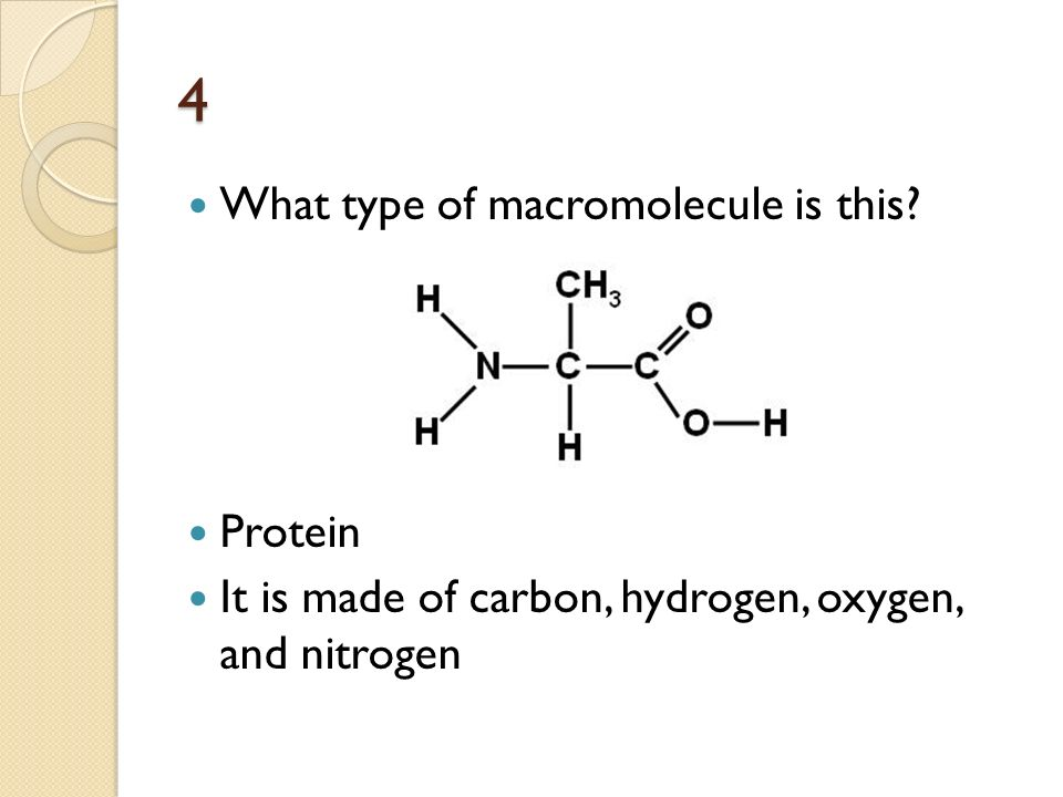 what is the role of a macromolecule A function of a protein macromolecule is: moving things in and out of cells transporting other molecules in the body protein macromolecule makes up the connective tissue i n tendons moves things in and out of cells.