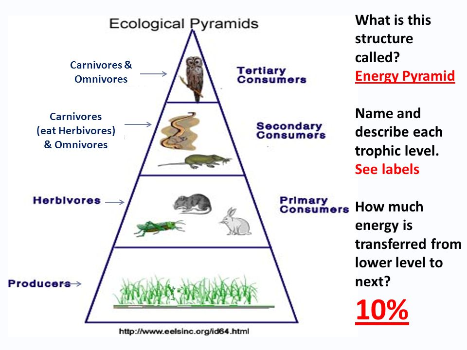 Ecology Quiz Review Ppt Download