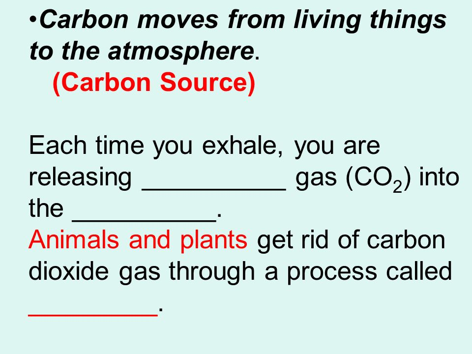 Carbon moves from living things to the atmosphere.