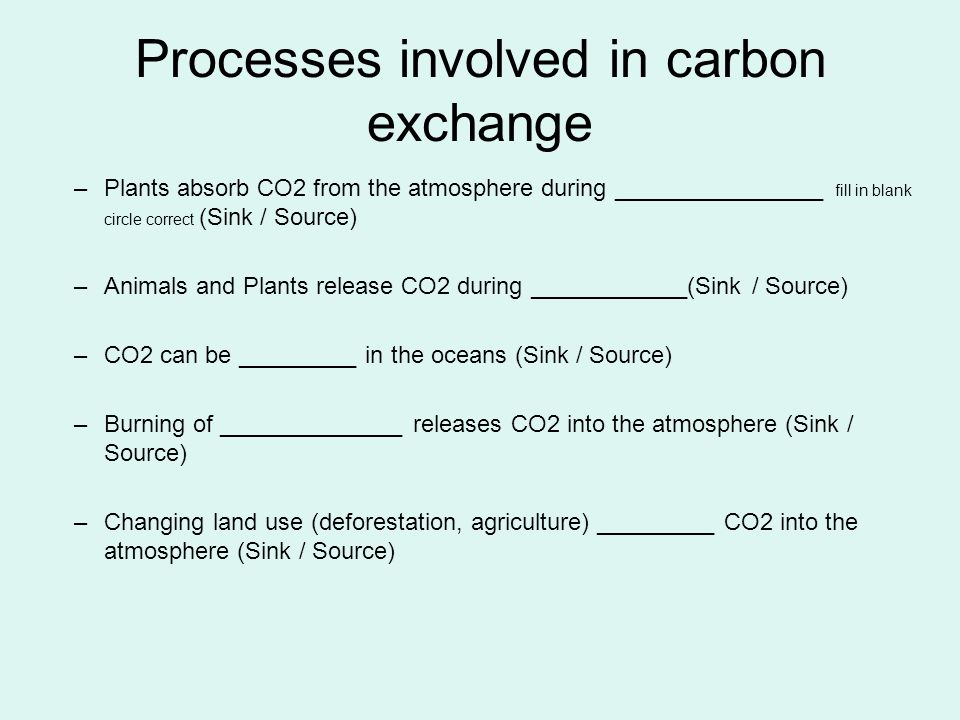 Processes involved in carbon exchange